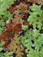Изображение к книге Аквариумные растения